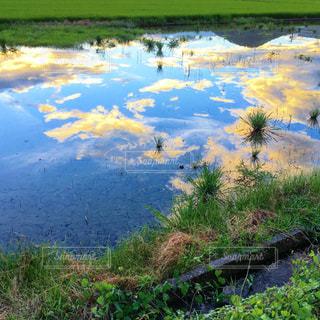 水がはった田んぼの写真・画像素材[1694377]