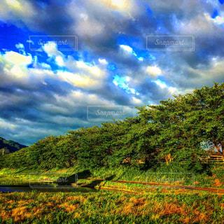 緑生い茂る木々と空の写真・画像素材[1694407]