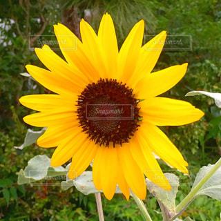 黄色の花の写真・画像素材[1696346]