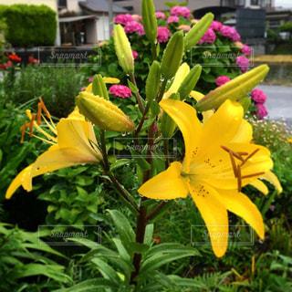 近くの花のアップの写真・画像素材[1696358]