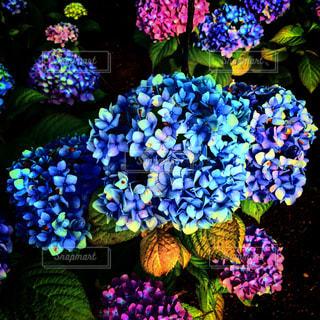 近くに紫の花のアップの写真・画像素材[1696565]