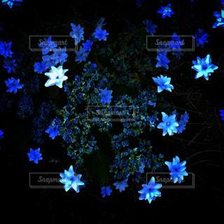 青い花の写真・画像素材[1696595]