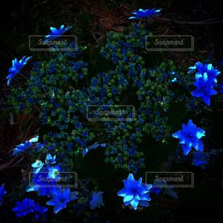 青い花の写真・画像素材[1696596]