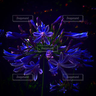 紫色の花の写真・画像素材[1696614]