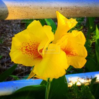 緑の葉と黄色の花の写真・画像素材[1696616]