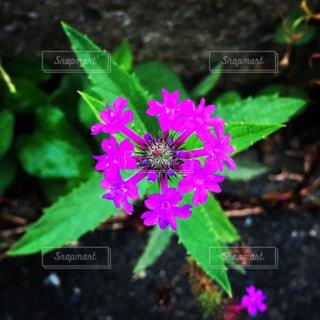 近くの花のアップの写真・画像素材[1696618]