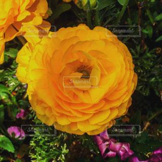 近くの花のアップの写真・画像素材[1805474]