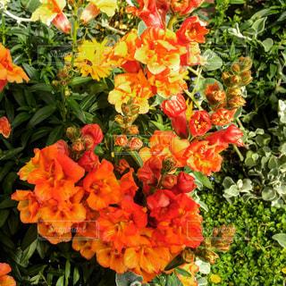 近くの花のアップの写真・画像素材[1805475]