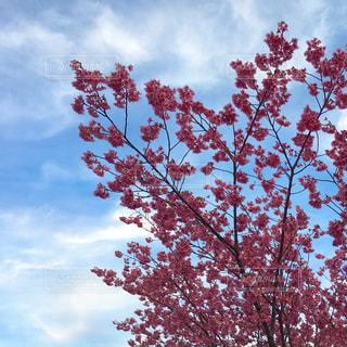 梅と空の写真・画像素材[1850853]
