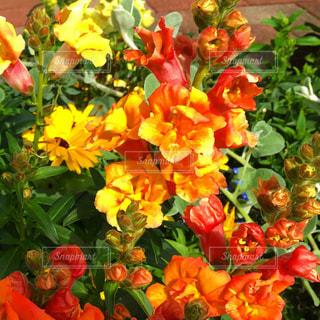 カラフルな花の植物の写真・画像素材[1868307]
