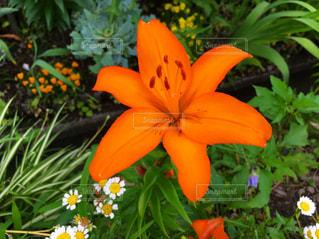 花の写真・画像素材[1959452]