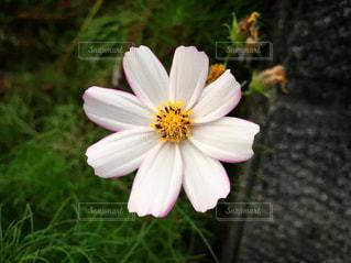 植物の上の白い花の写真・画像素材[2094067]