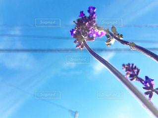 花と空の写真・画像素材[2118669]