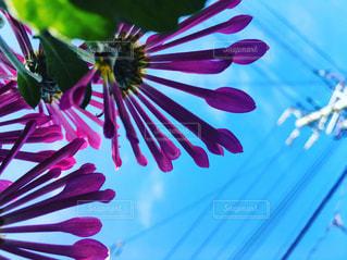 花のクローズアップの写真・画像素材[2118670]