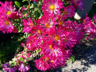花のクローズアップの写真・画像素材[2118671]