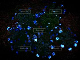 輝く花の写真・画像素材[2118752]
