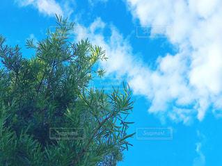 空と見上げた木の写真・画像素材[2118754]