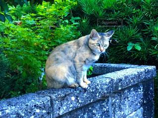 塀に座っている猫の写真・画像素材[2140080]