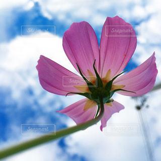 花のクローズアップの写真・画像素材[2140081]