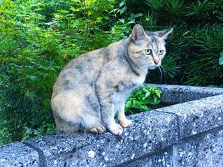 塀の上の猫の写真・画像素材[2140318]