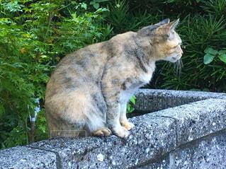 岩の上に座っている猫の写真・画像素材[2140319]