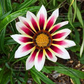 花のアップの写真・画像素材[2145498]