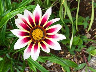 花と草の写真・画像素材[2145571]