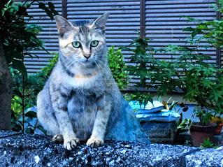 猫の写真・画像素材[2147870]