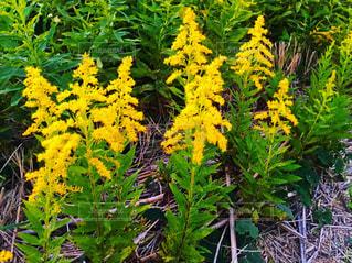 黄色い花と草の写真・画像素材[2149987]
