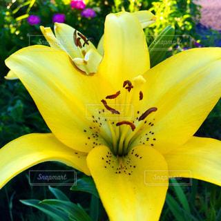 黄色い花のアップの写真・画像素材[2222147]