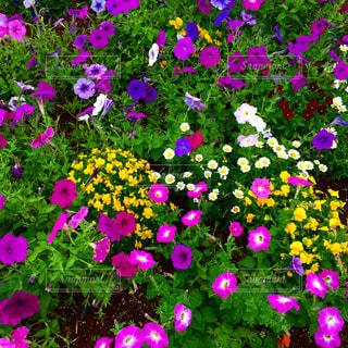 花壇の写真・画像素材[2223219]