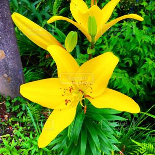 黄色い花の写真・画像素材[2245979]