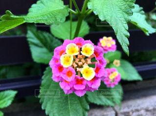 花の写真・画像素材[2249734]
