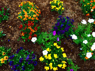 花壇の写真・画像素材[2249736]