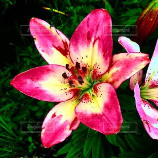 花のクローズアップの写真・画像素材[2269080]