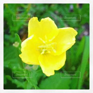 花のクローズアップの写真・画像素材[2316176]