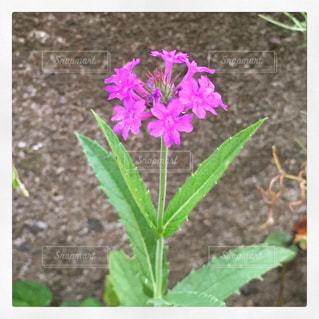 花のクローズアップの写真・画像素材[2332270]