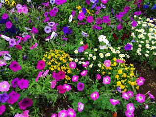 花壇の写真・画像素材[2337232]