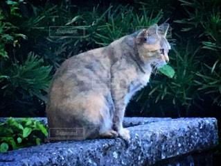 ネコの写真・画像素材[2353697]