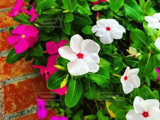 花のクローズアップの写真・画像素材[2435593]