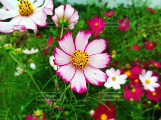 花と草の写真・画像素材[2610663]