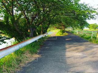 初夏の道の写真・画像素材[2709524]