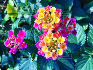 花のクローズアップの写真・画像素材[2797167]