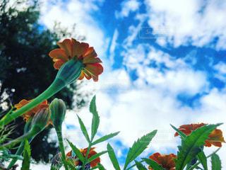 花のクローズアップの写真・画像素材[2975683]