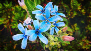 水色の花のクローズアップの写真・画像素材[3122177]