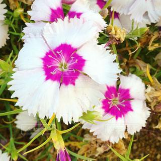 植物の上のピンクの花の写真・画像素材[3161244]