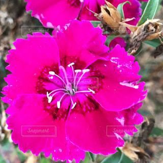 花のクローズアップの写真・画像素材[3296924]