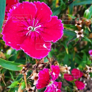 花のクローズアップの写真・画像素材[3296925]