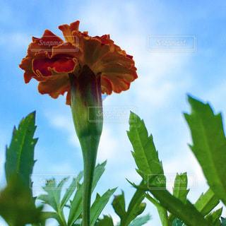 花のクローズアップの写真・画像素材[3308009]