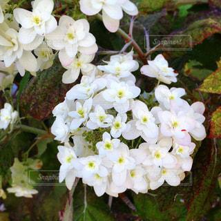 花のクローズアップの写真・画像素材[3314374]